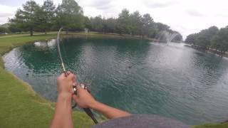 """MUST WATCH"" Monster Fish Caught in small pond"