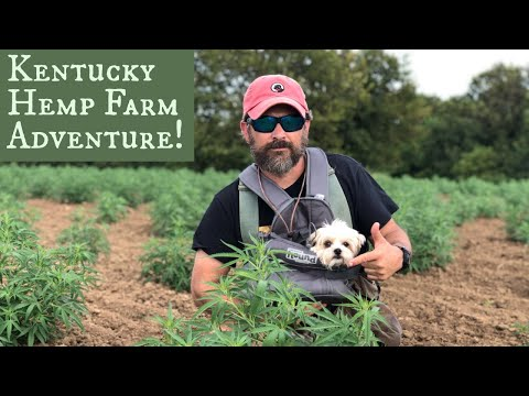 Hemp Farm Adventure - Labrador Retrievers Plus King of the Morkies!