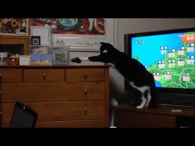 ナスの精霊馬に警戒する猫
