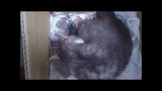 кошка родился  Классное видео Birth of cat