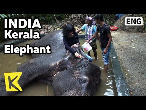 【K】India Travel-Kerala[인도 여행-케랄라]코끼리 집합소/Elephant/Ride/Ivory