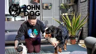 Jak zapoznawać szczeniaka z dorosłymi psami? – TRENING – John Dog