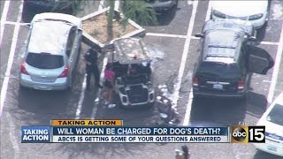 what happens next after dog dies after being left in hot car