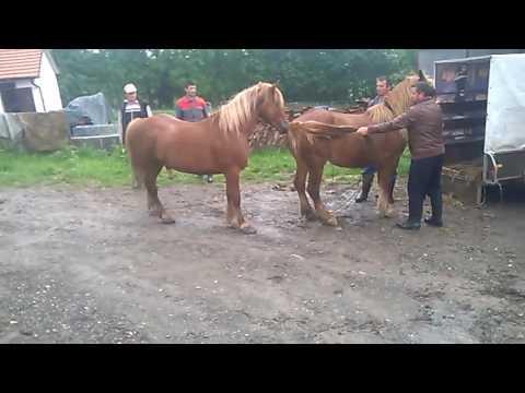 Download Parenje konja