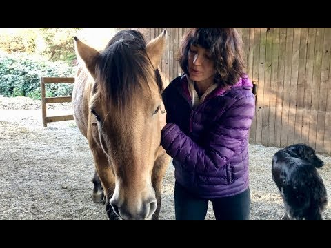 How to Do Cranial Massage for your Horse