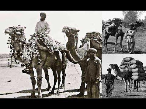 Ships of the Desert, Afghan Cameleers in Australia - ABC Radio