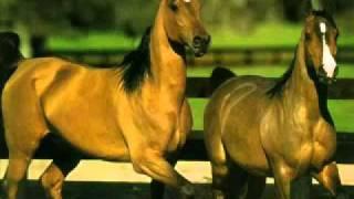 O Ball Ro Cavall