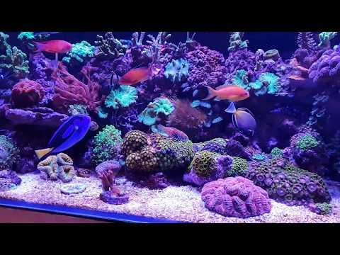 mi-acuario-marino,-equipo,-rutinas-y-mantenimiento.