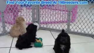Toy Poodle Puppies For Sale 19breeders