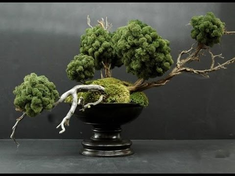 Tropical Bonsai Trees With Driftwood Youtube