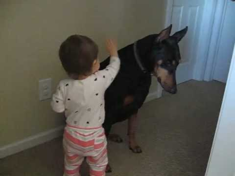 Doberman submissive to a baby girl
