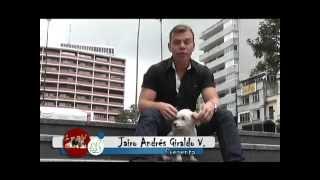 Los Caniche O French Poodle En Mascotas A Lo Bien