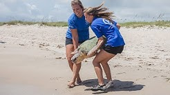 Triple Sea Turtle Release on East Coast of Florida