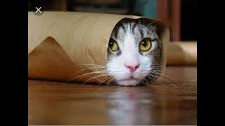 Kumpulan vidio kucing lucu terbaru