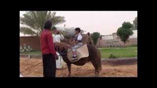 عطلة رائعة في اسطبلات الخيول في منطقة الجوف