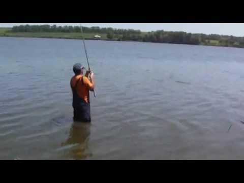 Карп на фидер. Монтаж метод. Рыбалка на озере.