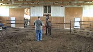 Xena Quarter Horse For Sale