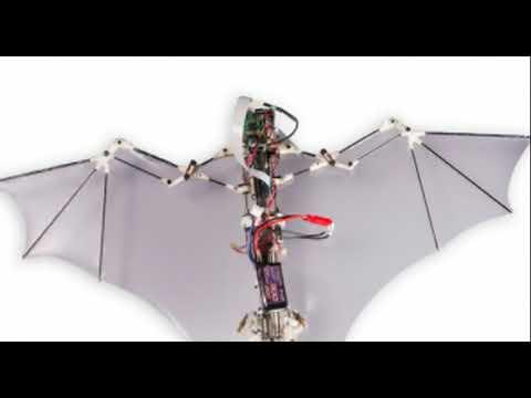 Wild! Pentagon Seeks Laser-Powered Bat Drones