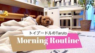 今年も、Taruちゃんのモーニングルーティンを撮ってみました   でも、【...