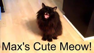Max has a CUTE Meow