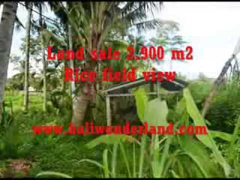Property for sale in Bali, amazing land for sale in Ubud Bali -- TJUB356