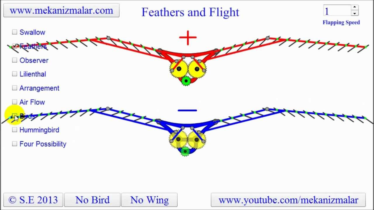 Bird Flight Diagram - Data Wiring Diagrams •