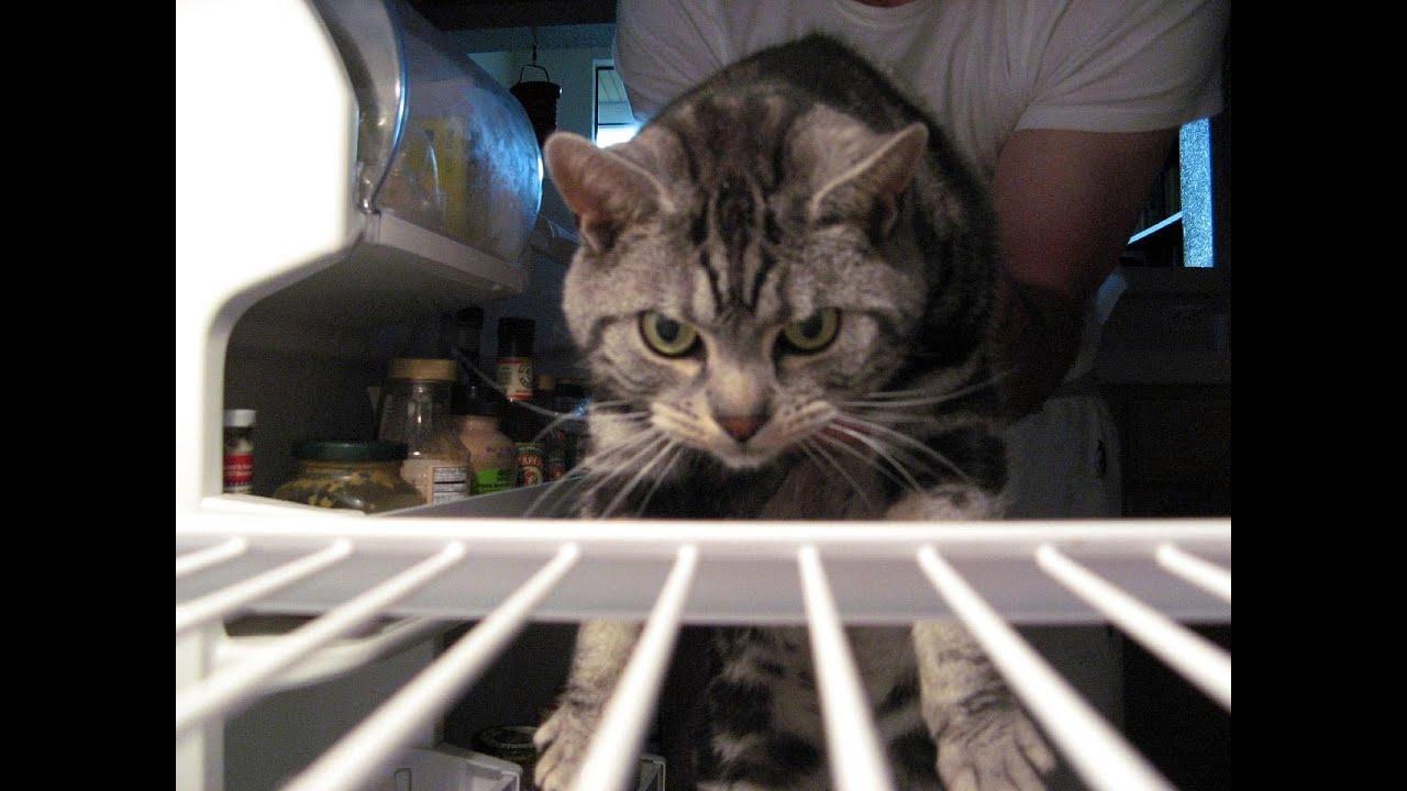Кот заклинает холодильник) - YouTube