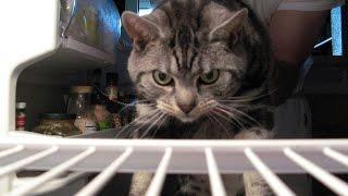Кот заклинает холодильник)(, 2015-12-19T12:05:03.000Z)
