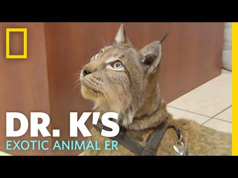 A Hairy Situation  Dr. K's Exotic Animal ER