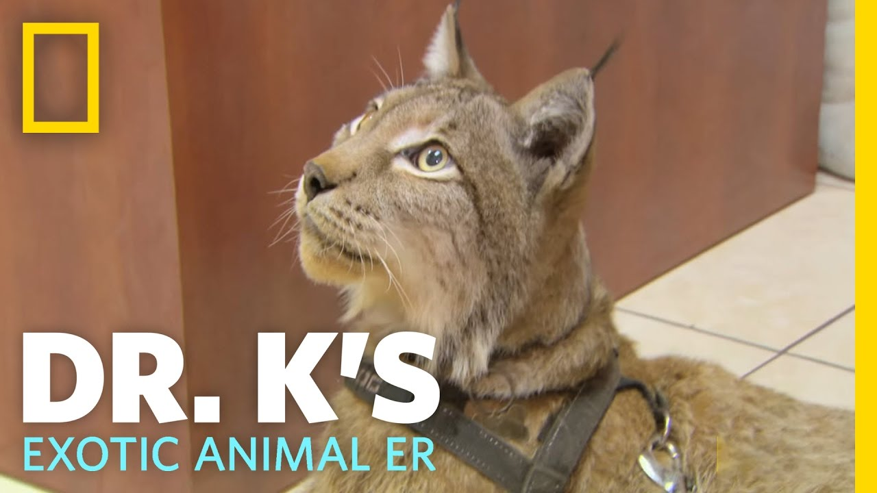 A Hairy Situation | Dr. K's Exotic Animal ER