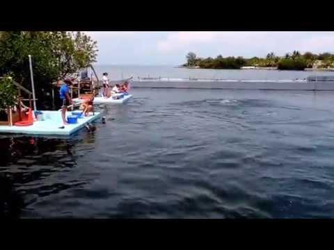 Sunday with Dolphins in Marathon Keys, Florida