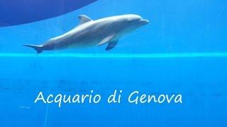 Acquario di Genova! - Wakacje 2013 ;)