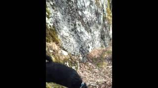 Ragge Mini Schnauzer/jack Russel Mix