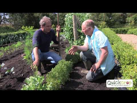 Grow Your Own Oca With Quickcrop