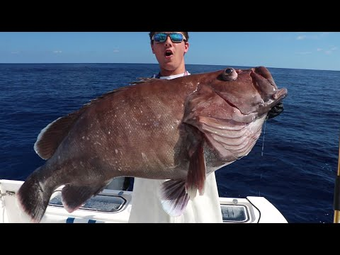 MASIVE BLOB FISH (WORLD RECORD)