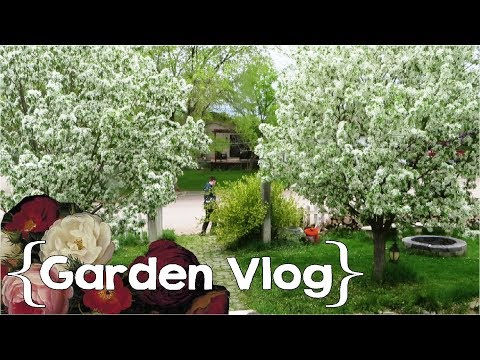 Spring Clean Up & A Small Plant Tour ║ Large Family Garden Vlog │ 2018 Ep. 2