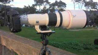 A Practical Review: Canon 800mm f/5.6 Lens
