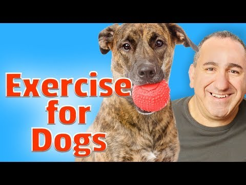How To Exercise Your Dog.