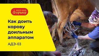 Как доить корову доильным аппаратом. Дойка коровы АДЭ 03.