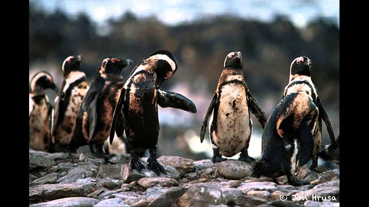 Chùm ảnh chấn động về ảnh hưởng của ô nhiễm môi trường đối với các loài động vật toàn cầu
