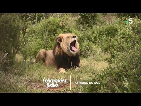 Destination Afrique Du Sud - Échappées Belles