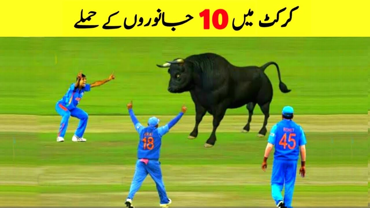 Top 10 Animal Attack in Cricket Ground