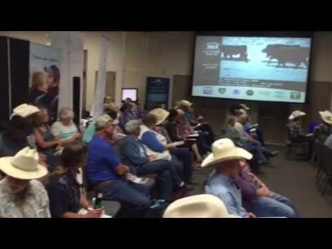 Superior livestock auction Winnemucca