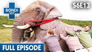 Helping An Elephant In South Africa | FULL EPISODE | S06E13 | Bondi Vet