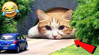 СМЕШНЫЕ ЖИВОТНЫЕ 2021 ПРИКОЛЫ КОТЫ СОБАКИ ЛУЧШИЕ ПРИКОЛЫ с Кошками и Собаками Funny Cats
