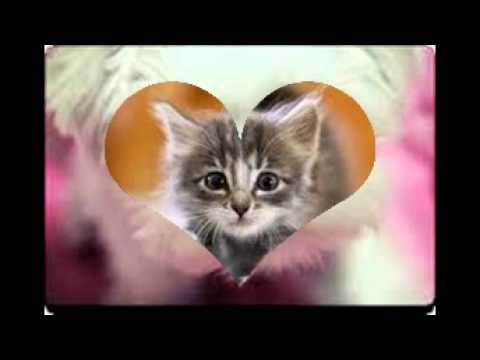 Photo de chat trop mignon youtube - Images de chats trop mignons ...