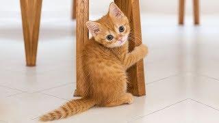 Смешные коты, кошки и другие животные (funny cats 2019) – ВОСПРЕЩЕНО ТОСКОВАТЬ, НЕВЕРОЯТНО СМЕШНО