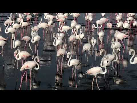 Dubai Bird Sanctuary (Ras al khor wild life Sanctuary)