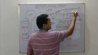 Autonomic Nervous System, physiological aspects of parasympathetic and sympathetic system