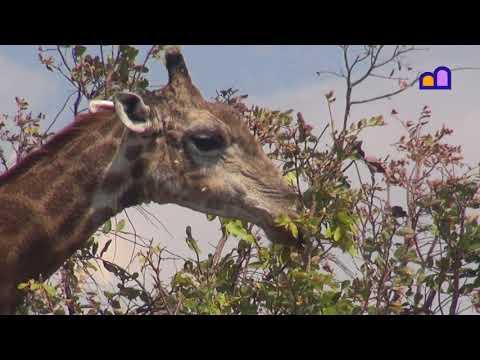 Malawi - Senga Bay, Kuti Wildlife Reserve